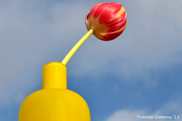 The yellow vase #15