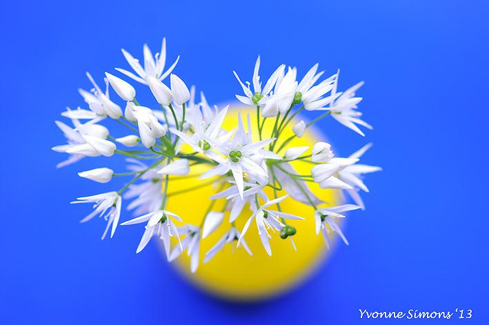 The yellow vase #19