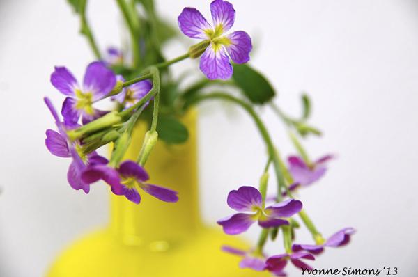 The yellow vase #24