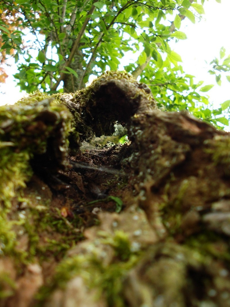 Wooden tunnel, dead branch