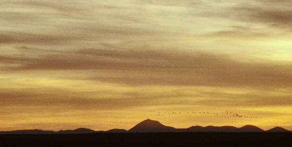Migrating with the setting sun
