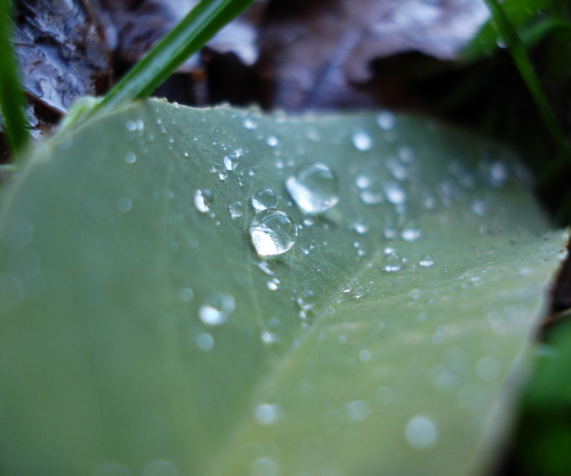 Drops on dead leaf