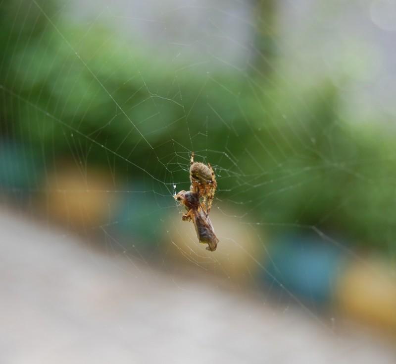Capturing Web