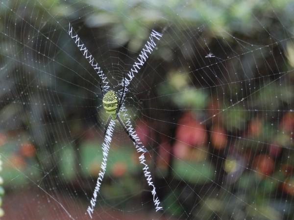 Capturing web Again