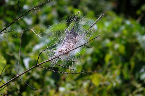 Complex Web