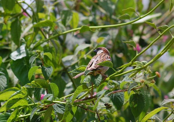 Sparrow Observing me