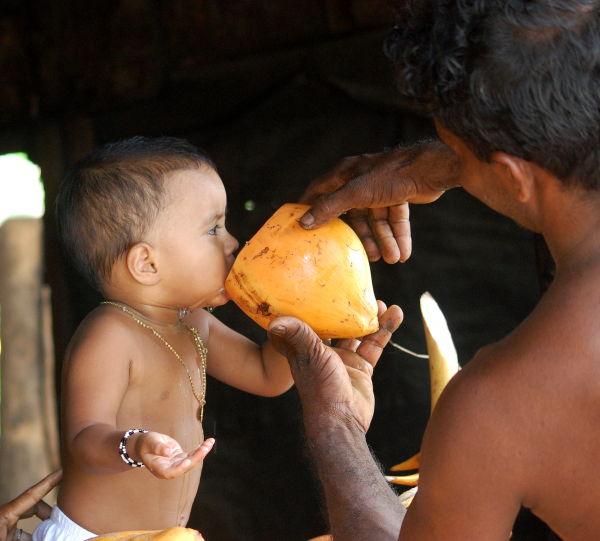 Taste of King Coconut