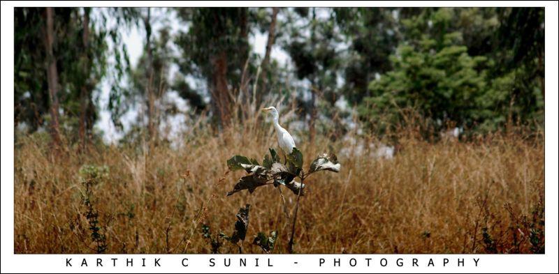 Seated White Bird