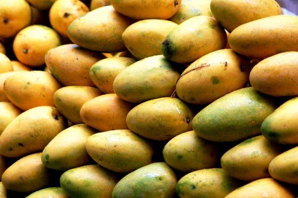 Mangoes Patterns