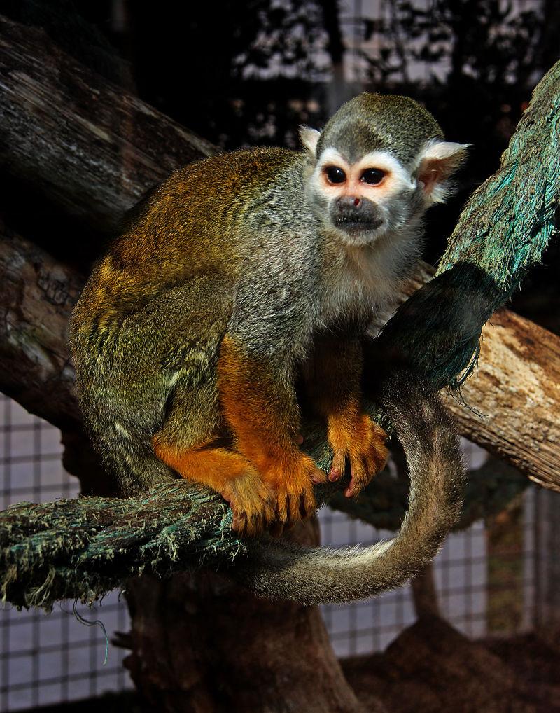 A seemingly gentle monkey
