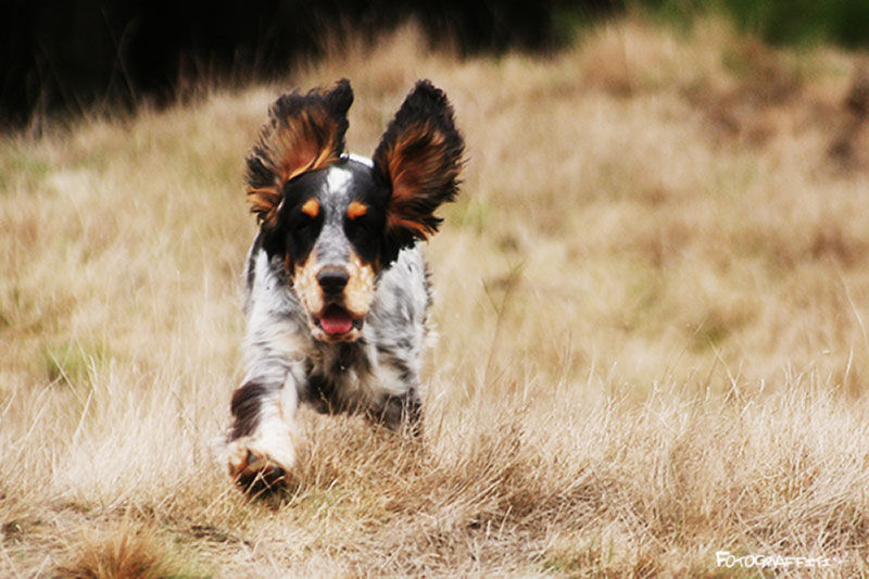 Ears are for flying!