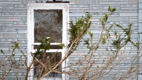 A tree growing across a window in a historic house