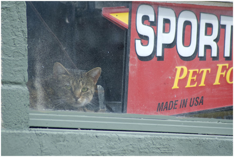 Cat in  Feed Store Window