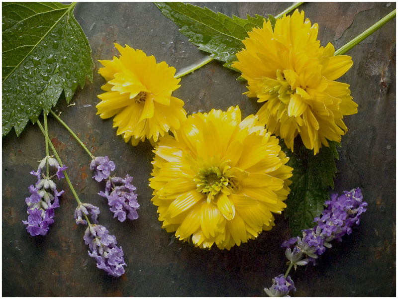 Flowers on Slate