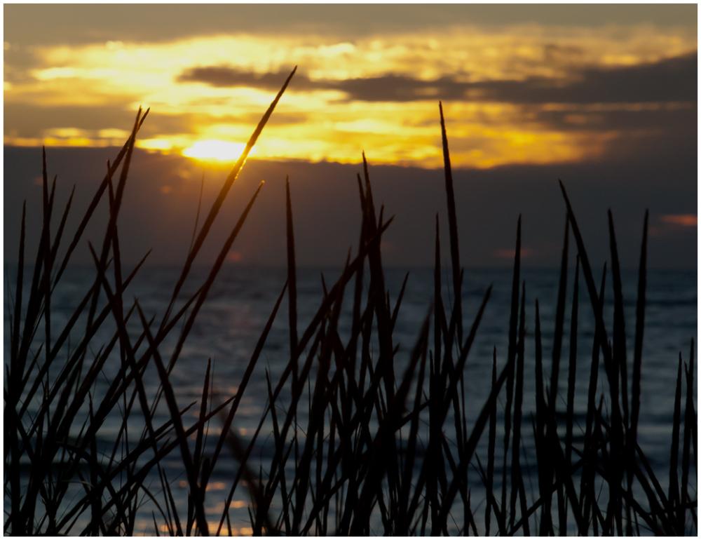 Beach Grass at Sun Set