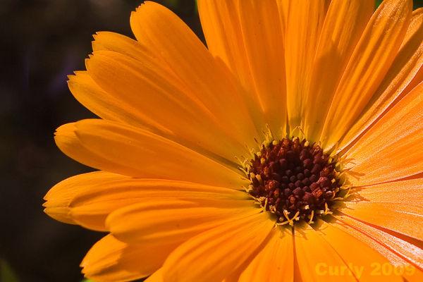 Flower in North Marine Park, South Shields