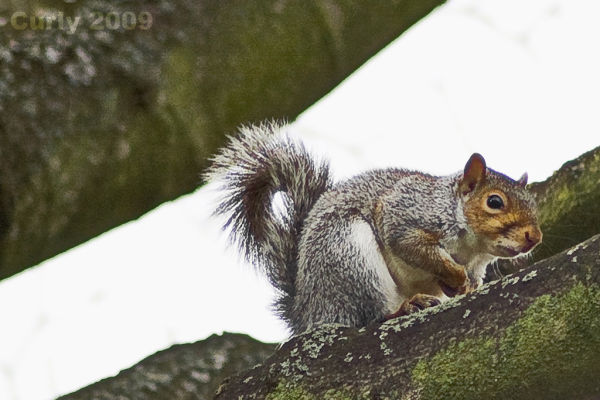Squirrel, Harton Cemetary, South Shields