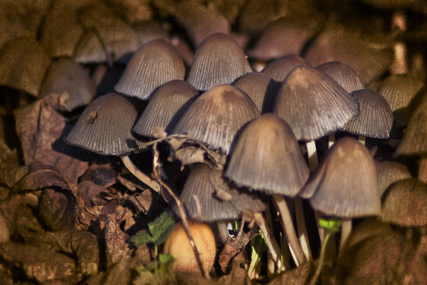 Mushrooms, West Park, South Shields