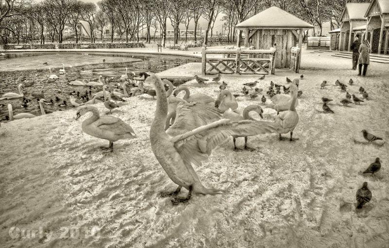 Swan, South Marine Park, South Shields