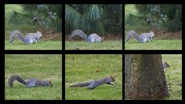 Squirrel, Harton Cemetery, South Shields