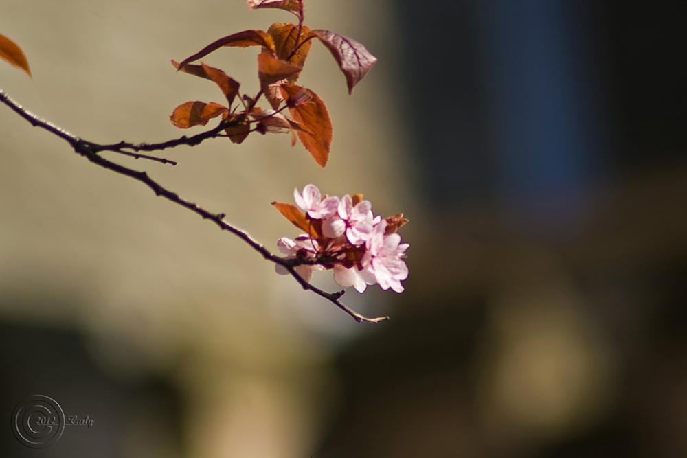 Blosson, Harton Cemetery, South Shields