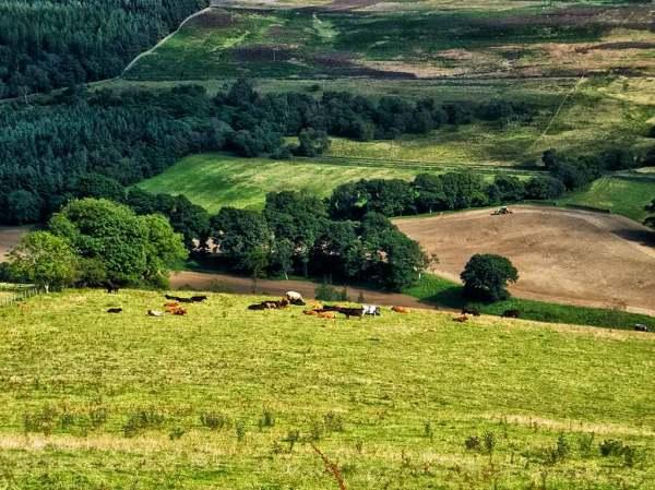 Tractor near Derwent Reservoir