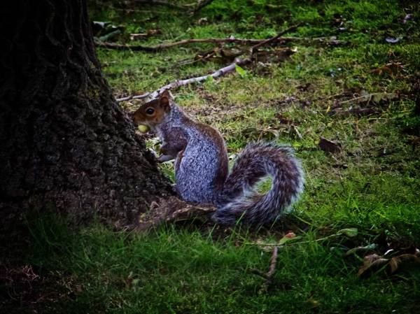 Squirrel, West Park, South Shields