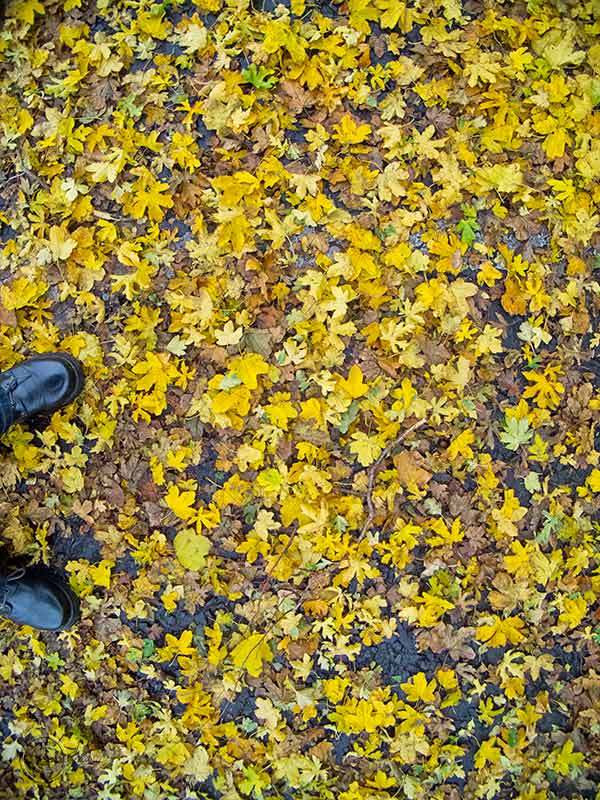 Autumn leaves, Customs House, South Shields