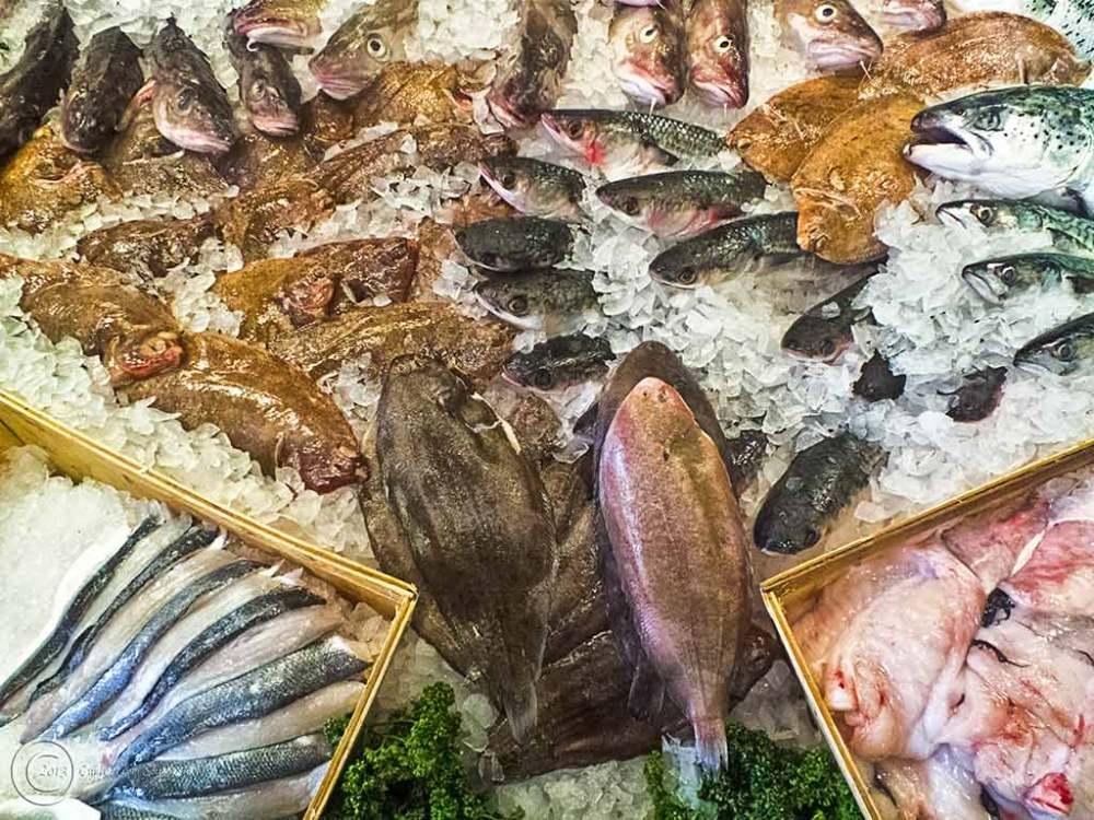 Fish at North Shields fish quay