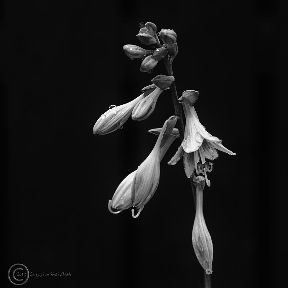 Flower, south shields, UK