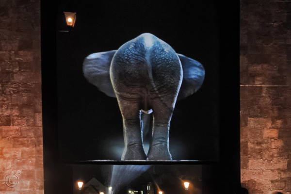 Lumiere Durham 2013 elephant