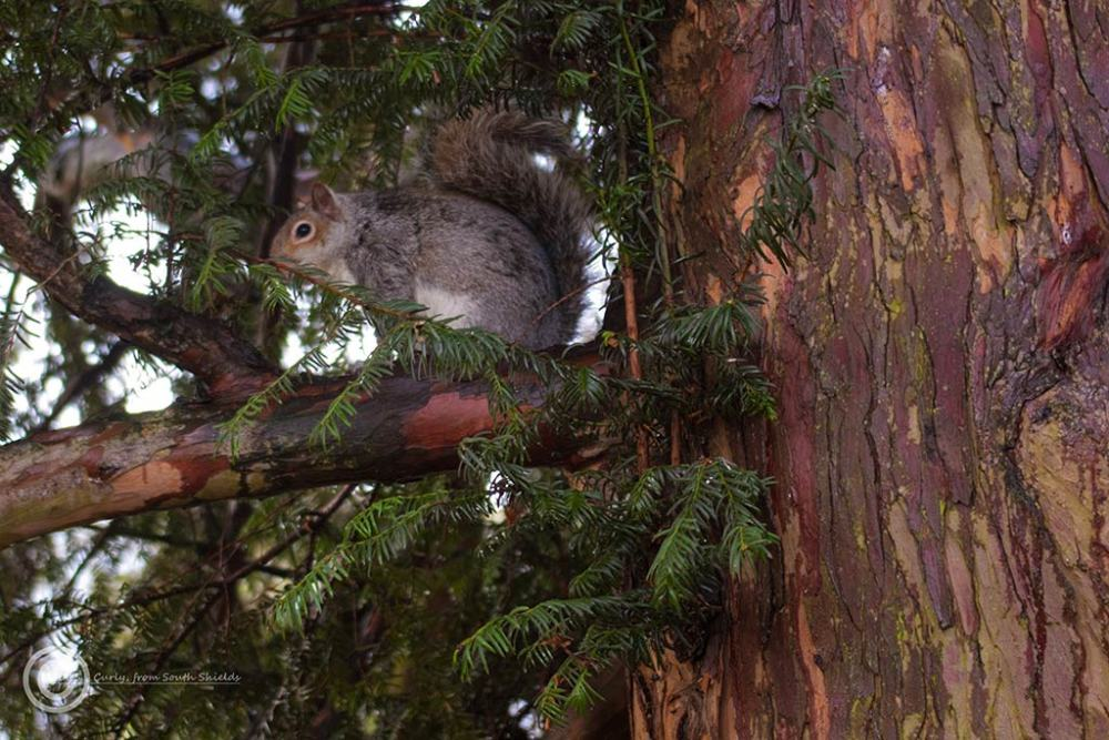 Squirrel in York