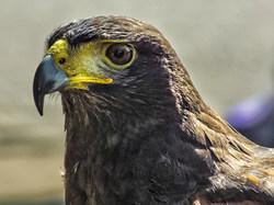 Eagle eyed.