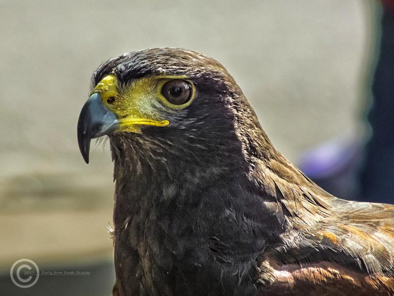 Birds of Prey, Museum Gardens, York