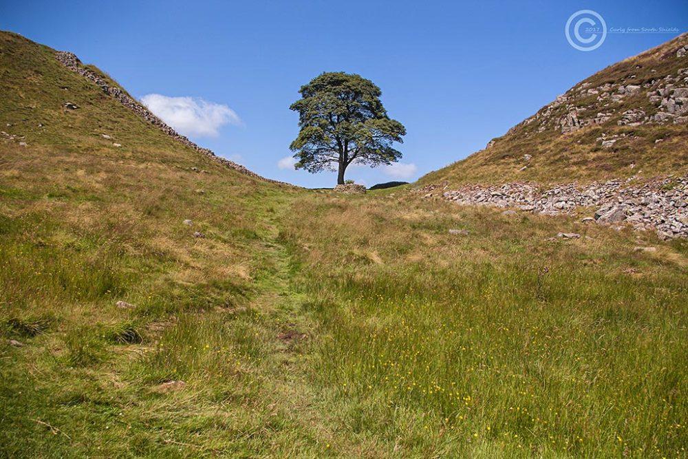 Sycamore Gap, Hadrian's Wall, Northumberland