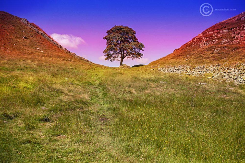 Sycamore Gap, Hadrian's Wall Northumberland.