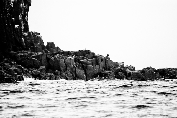 Farne Islands coast with birds.