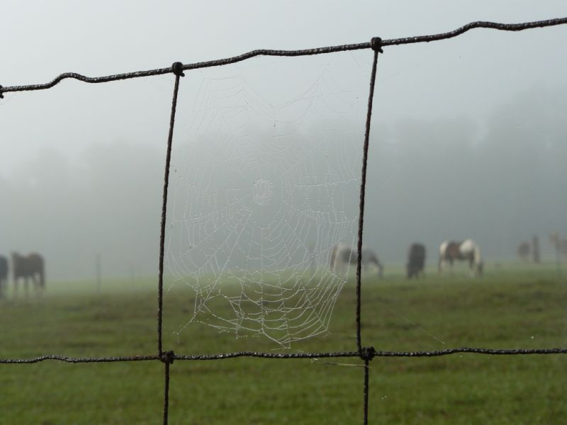 Spider web in the morning dew