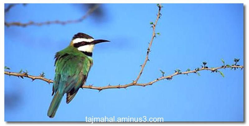 Bharatpur Bird Century