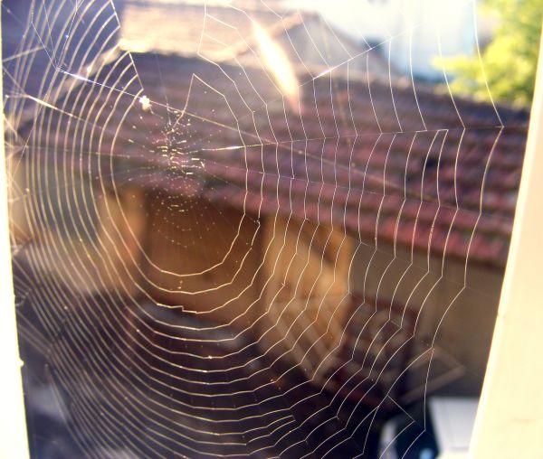 toile d'araignée au matin