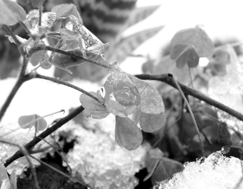 surpris par la neige... de novembre