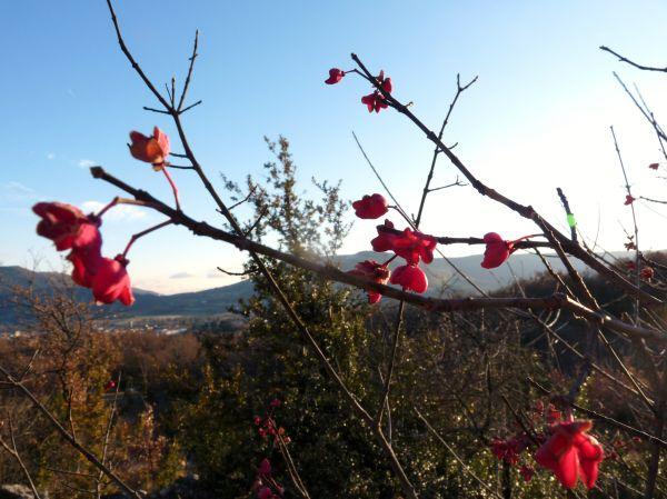 végétation et vue sur le massif du coiron