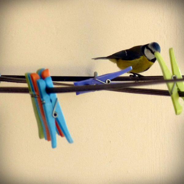 with plastic birds
