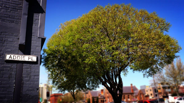 Addie Place Tree