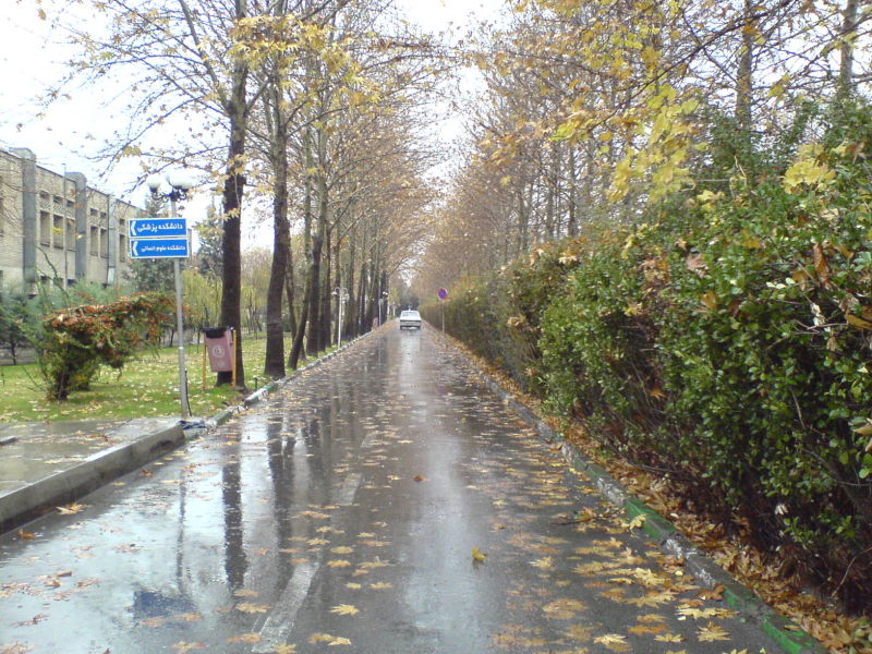 a rainy day in autumn