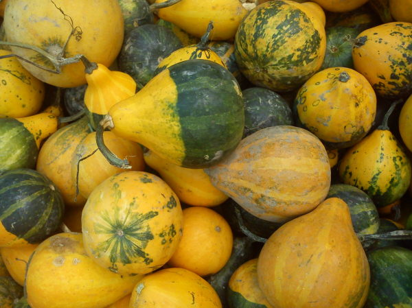 gourd for decoration