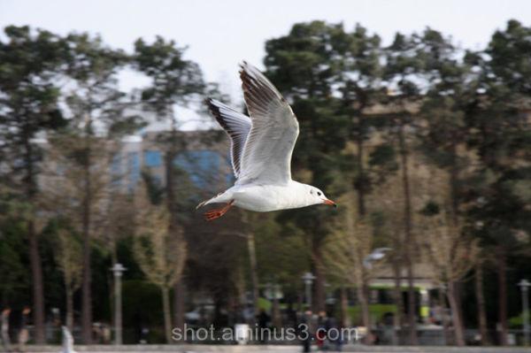 birds in esfahan