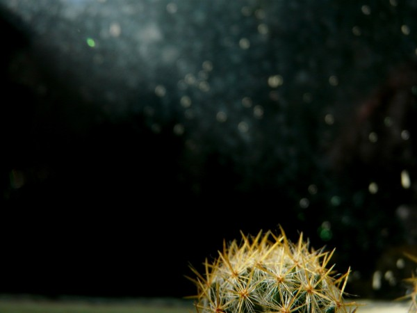 lasilvi silvialew photo cactus macro stars