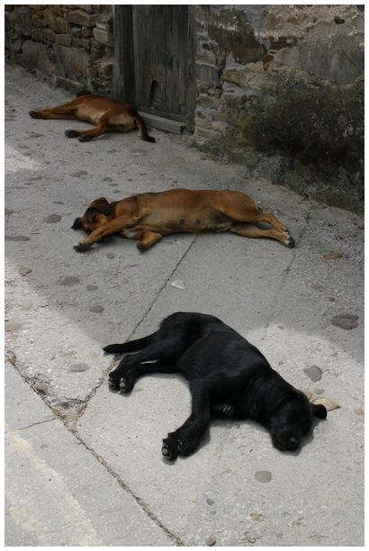 dogs' life