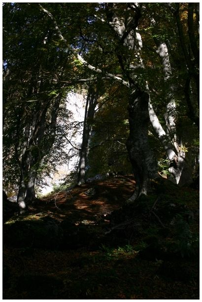 light in the wood